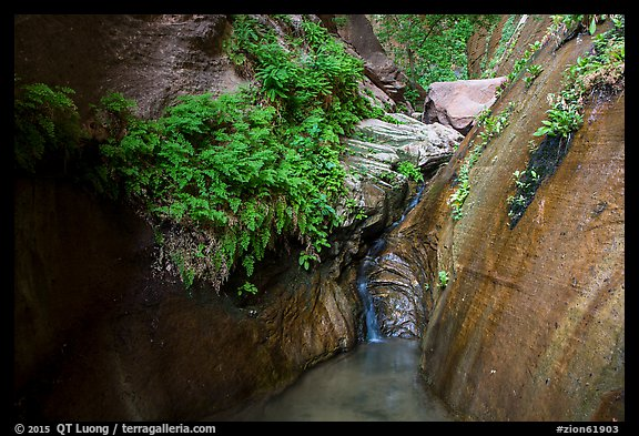 Ferns and stream, Mystery Canyon. Zion National Park (color)