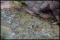 Virgin River Narrows hikers from above. Zion National Park ( color)