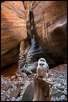 Juvenile owls in sculpted canyon chamber, Pine Creek Canyon. Zion National Park ( color)