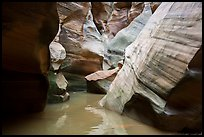 Slot canyon narrows and reflections, Pine Creek Canyon. Zion National Park ( color)