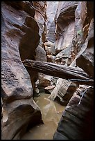 Stuck log in flooded canyon, Pine Creek Canyon. Zion National Park ( color)
