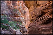 Tall canyon walls, Pine Creek Canyon. Zion National Park ( color)