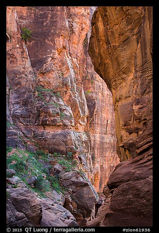 Pine Creek Canyon walls. Zion National Park (color)