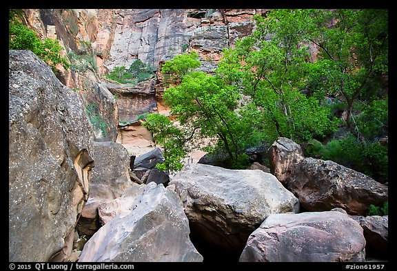 Huge boulders and trees, Pine Creek Canyon. Zion National Park (color)