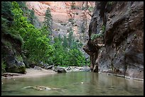 Wide portion of the Narrows with pocket of forest. Zion National Park ( color)