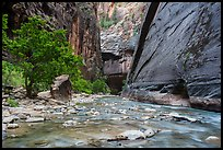 Wide section of Virgin River and forest in the Narrows. Zion National Park ( color)