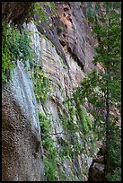 Canyon wall with wildflowers. Zion National Park ( color)