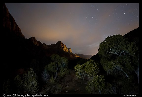 Trees and Watchman at night. Zion National Park (color)