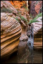 Scuptured canyon and reflections, Echo Canyon. Zion National Park ( color)