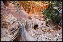 Trees and swirling rocks, Echo Canyon. Zion National Park ( color)