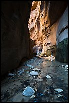 Stream and glowing wall, Orderville Canyon. Zion National Park ( color)