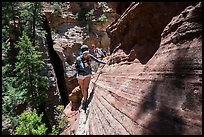 Hiker on narrow ledge, Russell Gulch. Zion National Park ( color)