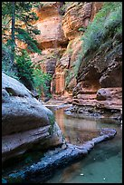 Emerald waters and canyon walls along Left Fork. Zion National Park ( color)