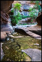 Green reflections, Upper Subway. Zion National Park ( color)