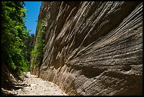 Open section and with tall walls, Orderville Canyon. Zion National Park ( color)