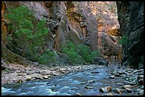 Virgin River flowing over stones in the Narrows. Zion National Park, Utah, USA.
