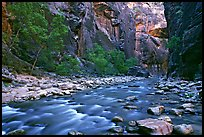 Virgin River in  Narrows. Zion National Park, Utah, USA. (color)