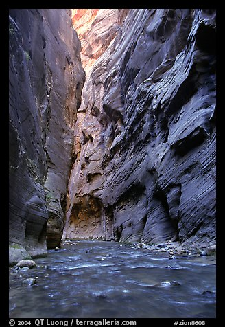 Slot canyon like walls, Wall Street, the Narrows. Zion National Park (color)