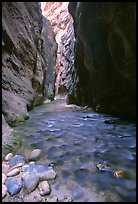Virgin River at Wall Street, the Narrows. Zion National Park, Utah, USA.