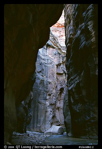 Section of the Narrows called Wall Street. Zion National Park (color)
