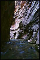 Tall sandstone walls of Wall Street, the Narrows. Zion National Park, Utah, USA.