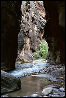 Wall Street, the Narrows. Zion National Park, Utah, USA.