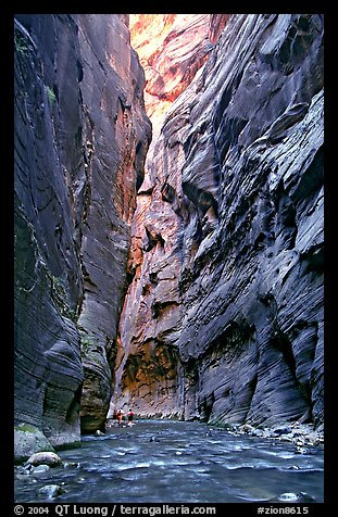 Hikers dwarfed by the walls of Wall Street, the Narrows. Zion National Park (color)