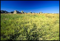 Tall grass prairie near Cedar Pass. Badlands National Park, South Dakota, USA.