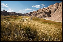 Grasses and badlands in Conata Basin. Badlands National Park ( color)