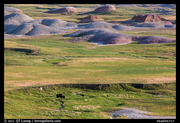 Distant bison and buttes, Badlands Wilderness. Badlands National Park (color)