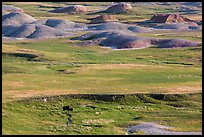 Distant bison and buttes, Badlands Wilderness. Badlands National Park ( color)