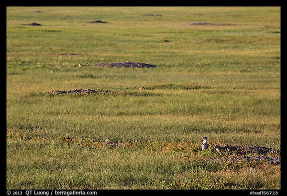 Picture Photo Roberts Prairie Dog Town Badlands National Park