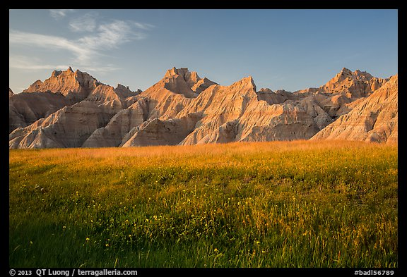 Grasses with summer flowers and buttes at sunset. Badlands National Park (color)