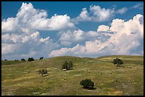 Rolling hills, junipers, afternoon clouds. Badlands National Park ( color)
