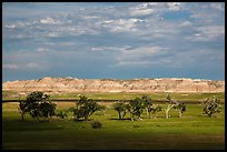Cottonwoods and badlands, Stronghold Unit. Badlands National Park ( color)
