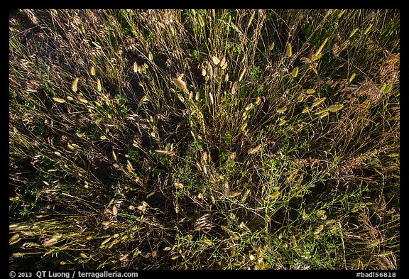 Close-up of mixed grasses, Stronghold Unit. Badlands National Park (color)