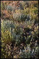 Mixed grasses, Stronghold Unit. Badlands National Park ( color)