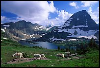 Mountain goats, Hidden lake and peak. Glacier National Park, Montana, USA.