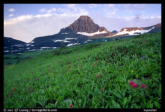 Wildflowers at Logan pass. Glacier National Park