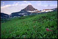 Wildflowers and peak at Logan pass. Glacier National Park, Montana, USA.