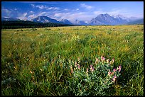 Prairie and Lewis range. Glacier National Park, Montana, USA. (color)