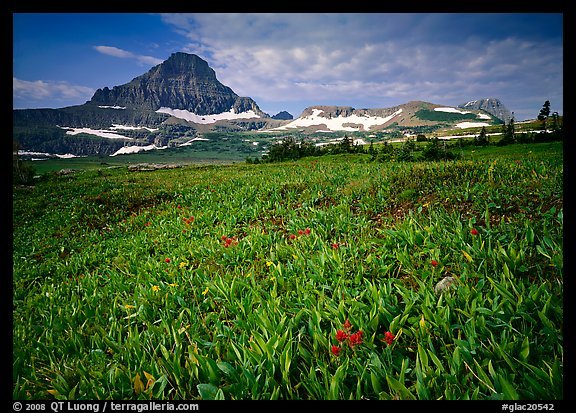 Alpine meadow with wildflowers and triangular peak, Logan Pass. Glacier National Park, Montana, USA.