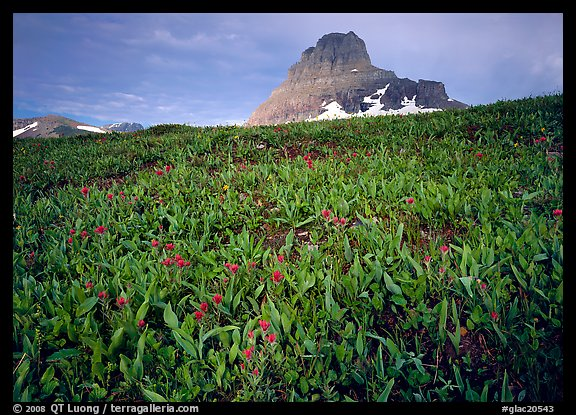 Alpine meadow, wildflowers, and Clemens Mountain. Glacier National Park (color)