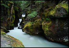 Mossy gorge, Avalanche creek. Glacier National Park, Montana, USA.