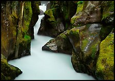 Water rushing in narrow mossy gorge, Avalanche Creek. Glacier National Park, Montana, USA.
