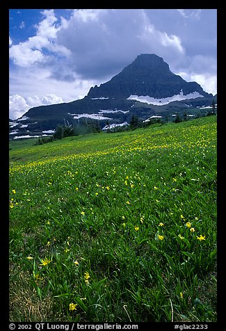 Meadow with wildflower carpet and triangular mountain, Logan pass. Glacier National Park (color)