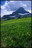 Meadow with wildflower carpet and triangular mountain, Logan pass. Glacier National Park, Montana, USA.