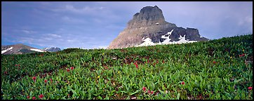 Alpine scenery with triangular peak rising above meadows. Glacier National Park (Panoramic color)