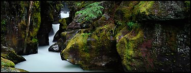 Lush gorge with frosted water. Glacier National Park (Panoramic color)