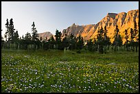 Meadow with wildflowers and Garden Wall at sunset. Glacier National Park, Montana, USA.